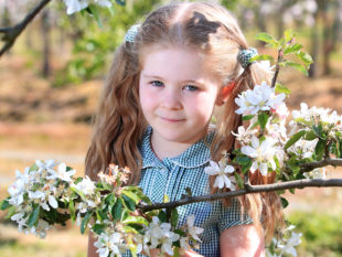 Cara Devlin, aged 7, looks really pretty in among the blossoms at Hamilton Loney's apple farm in Richhill ahead of this year's Richhill Apple Harvest Fayre Picture: Cliff Donaldson MGMPR Ltd