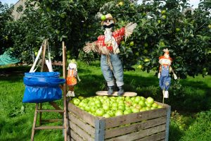 The Richhill Apple Harvest Fayre takes place on October 28 Live It Experience It
