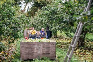 Eleanor McGillie goes apple picking in the orchards - Lunch break in the orchards - apple pickers take a break in Co Armagh's famous orchards. MGMPR_07