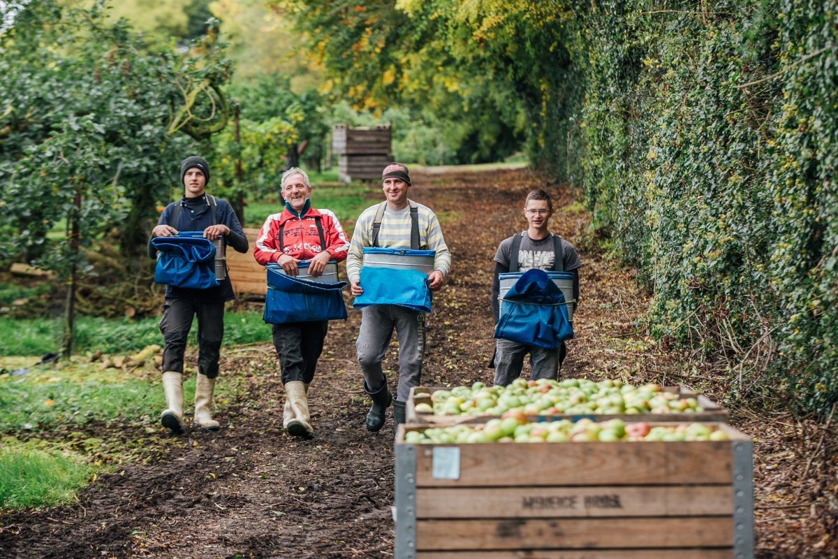 The joys of apple picking in Co Armagh's famous orchards as crates are filled and taken away. MGMPR_02