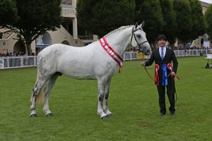 Cappa Dianthus - Cappa Stud where all stallions are fed with Bluegrass Horse Feeds. Copyright www.esphotography.co.uk