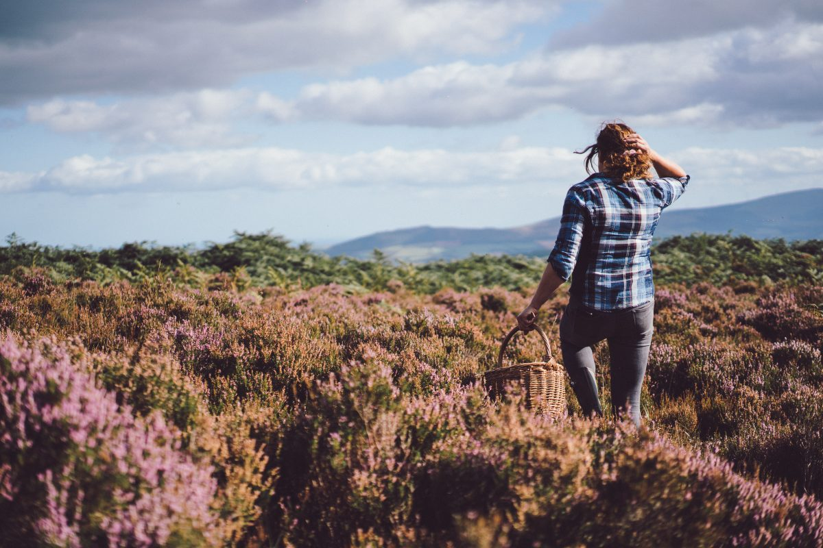 Foraging in the Wicklow hills with Geraldine Kavanagh of Wicklow Wild Foods